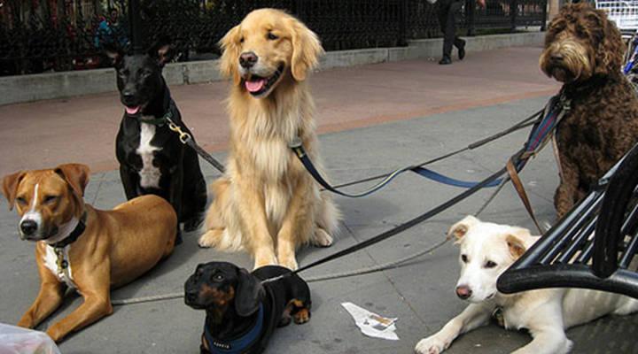 Como ser um cuidador de cães