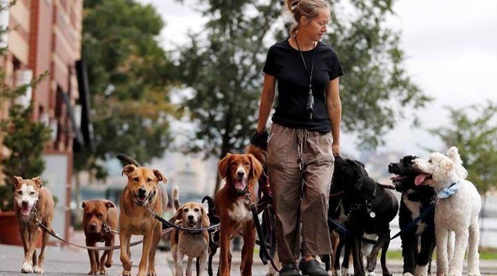 Como ser um dog walker: dicas para você se tornar um passeador profissional