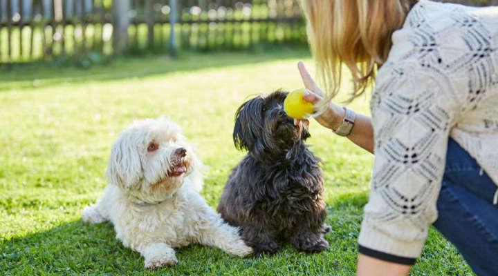 Quanto tempo leva para adestrar um cachorro?