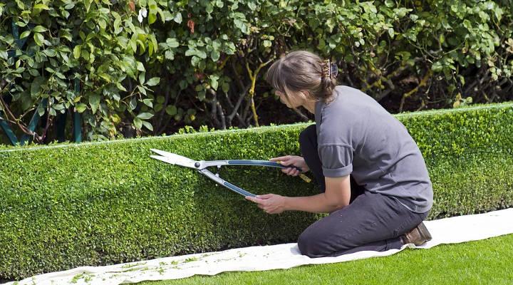 Quanto custa manter um jardim?